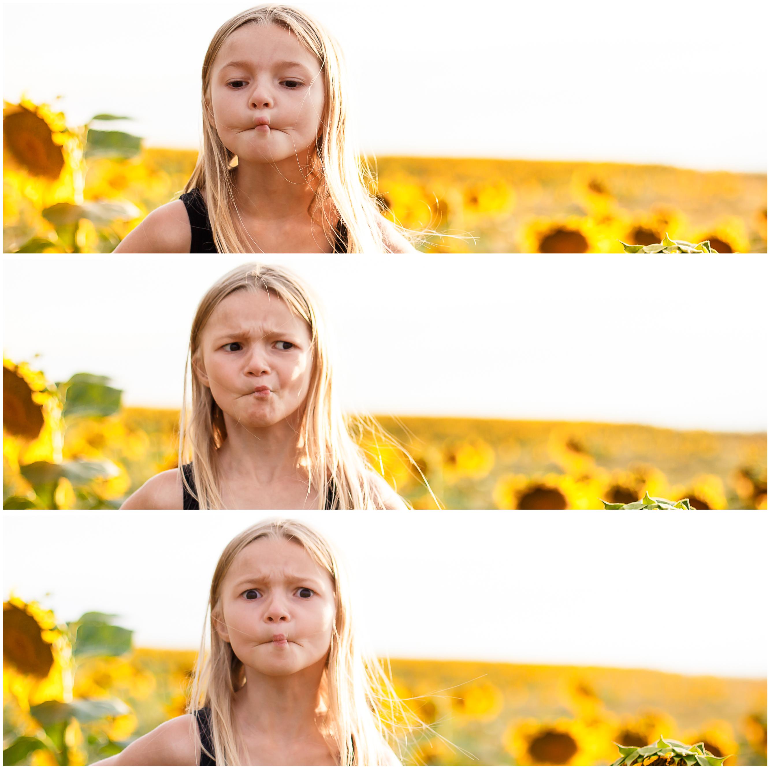 sunflower-photos-1
