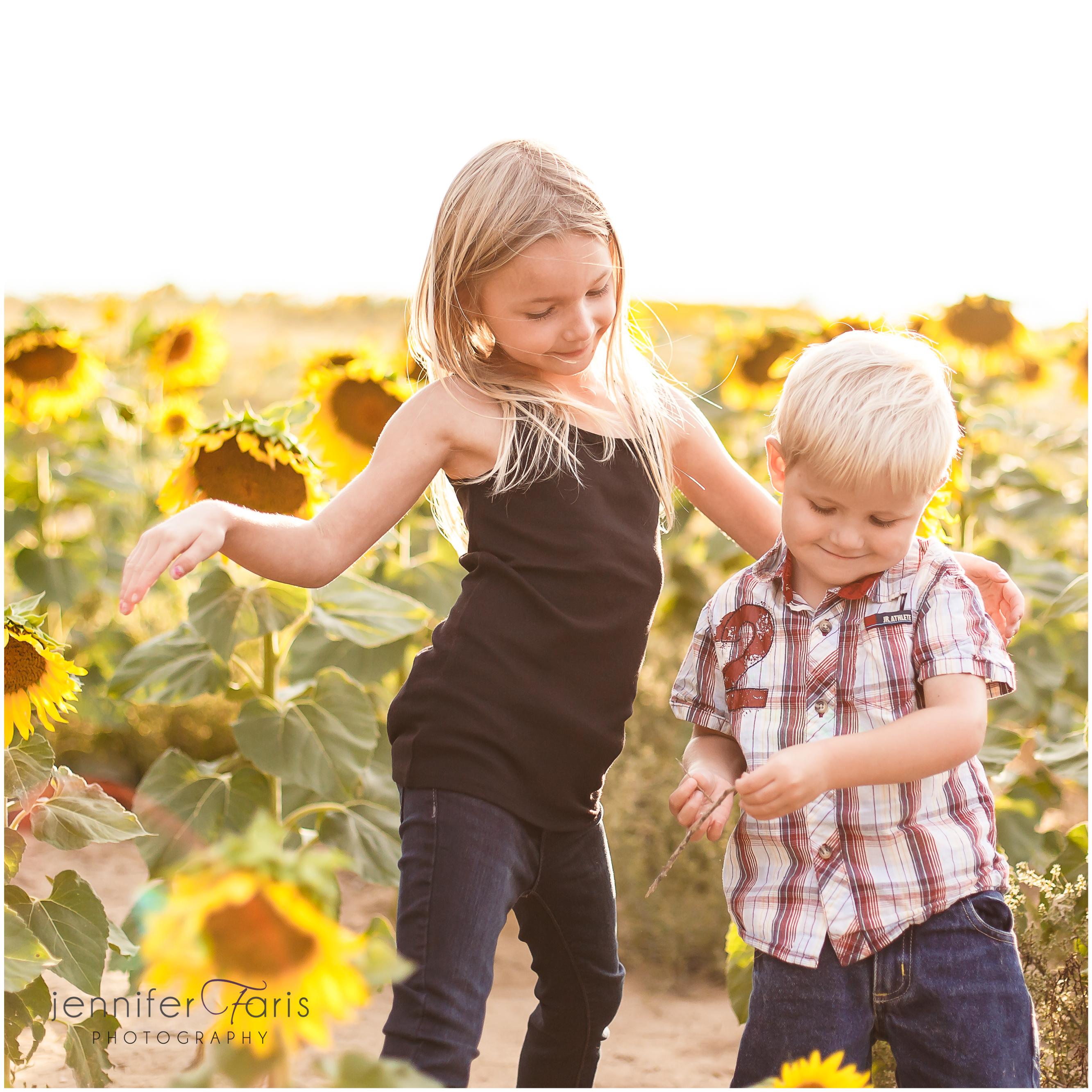 sunflower-photos-2
