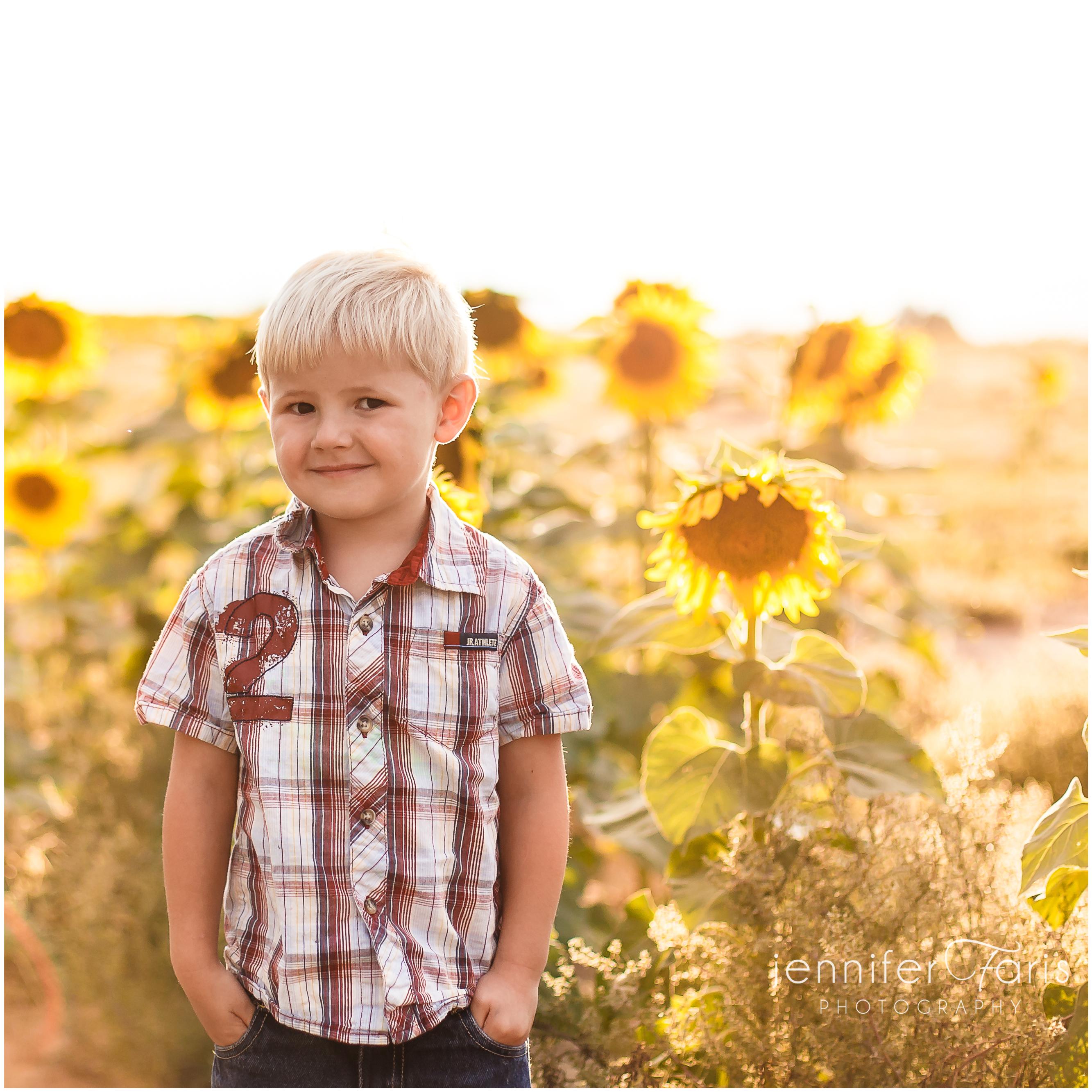 sunflower-photos-3