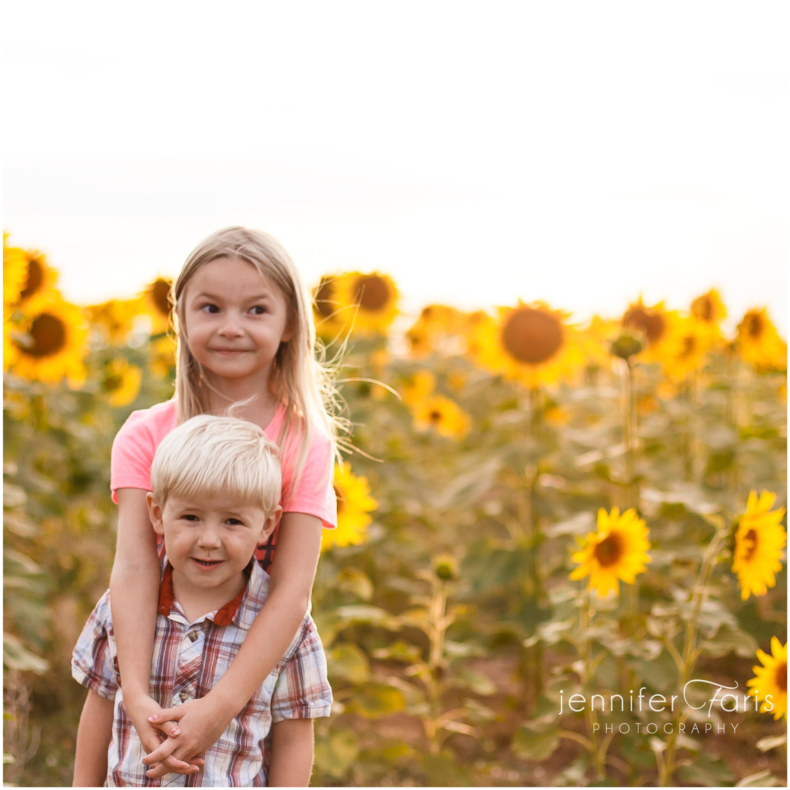 sunflower-photos-8