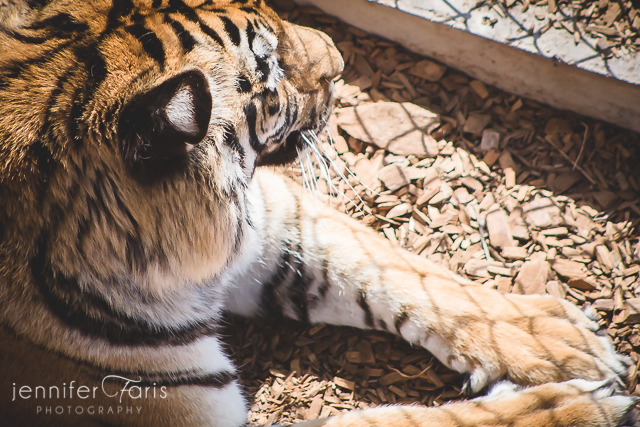 wildlife-sanctuary-jenniferfarisphoto-100