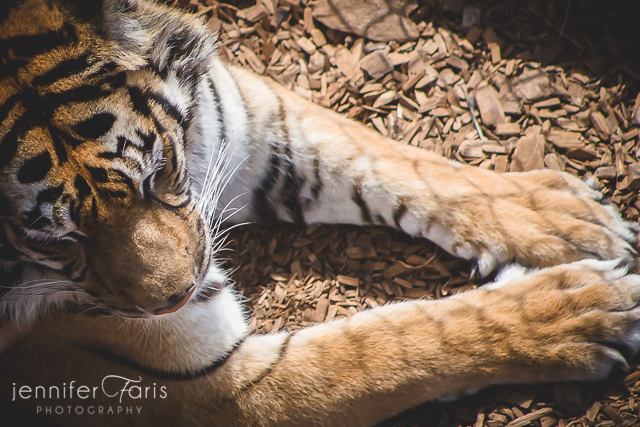 wildlife-sanctuary-jenniferfarisphoto-101