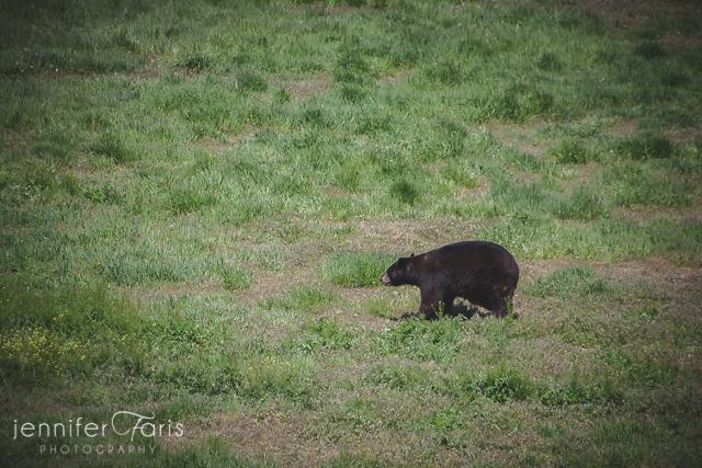 wildlife-sanctuary-jenniferfarisphoto-104
