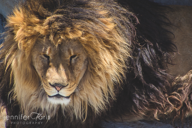 wildlife-sanctuary-jenniferfarisphoto-110