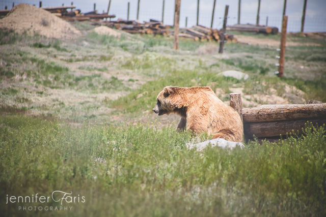 wildlife-sanctuary-jenniferfarisphoto-113